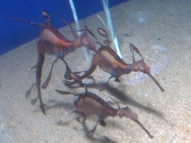 サンシャインシティ水族館06