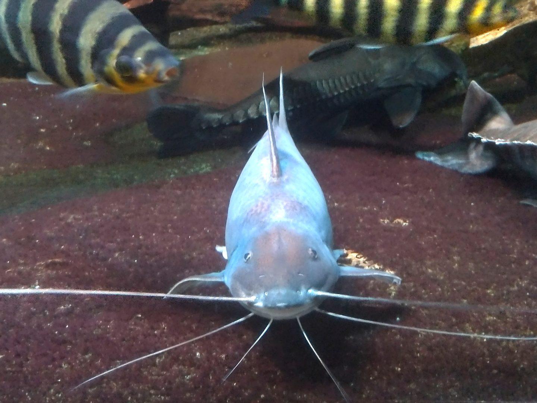 サンシャインシティ水族館13