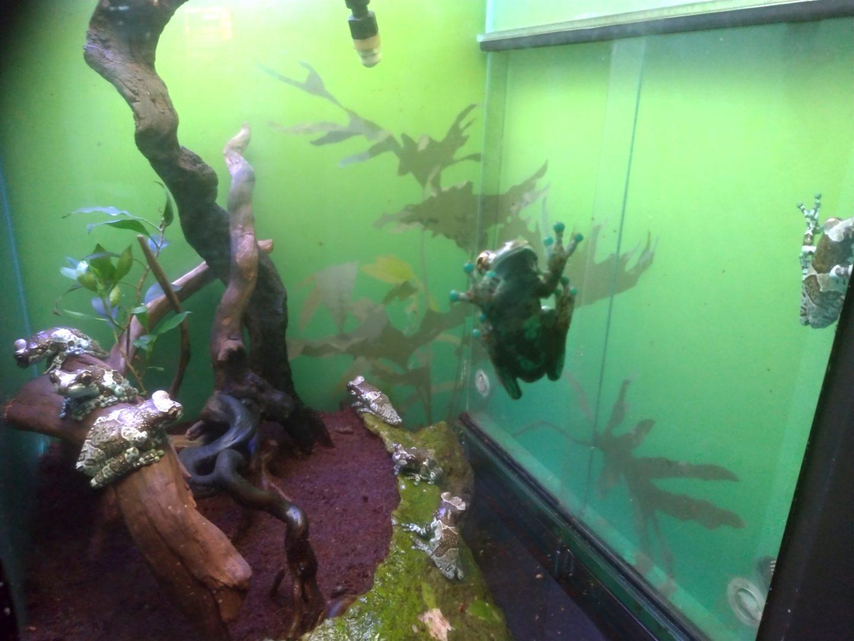 サンシャインシティ水族館19