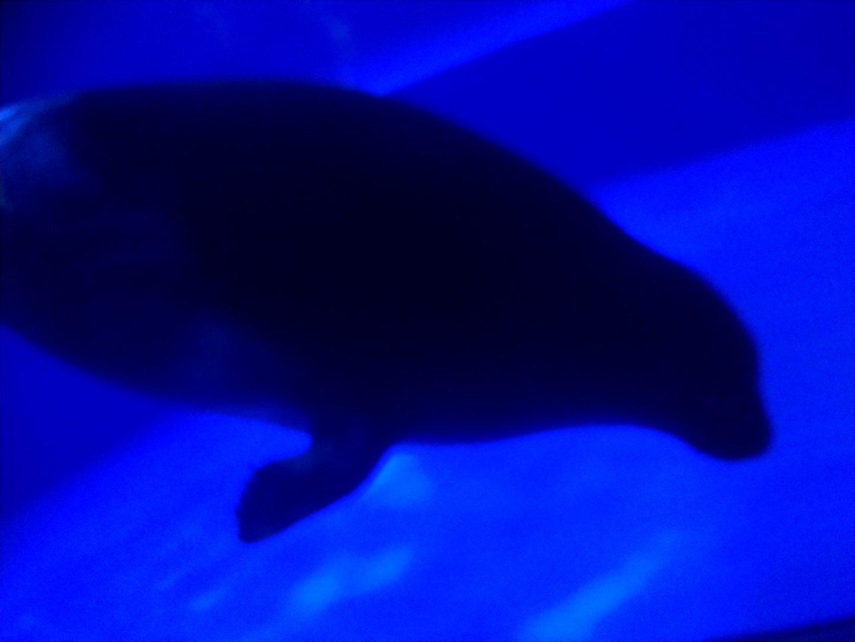 サンシャインシティ水族館23
