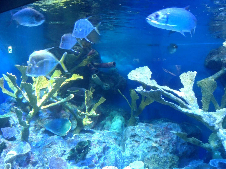 サンシャインシティ水族館24
