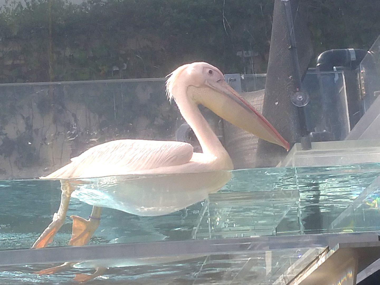 サンシャインシティ水族館27