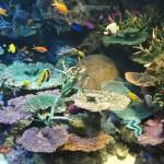 KMのコミュニティ 池袋サンシャインシティ水族館巡り