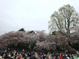 KMのコミュニティ花見会(4)
